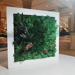 Картина 300*300 мм з стабілізованих рослин Карпати
