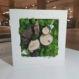 Картина Botania Art 200*200 мм з стабілізованих рослин Карпати