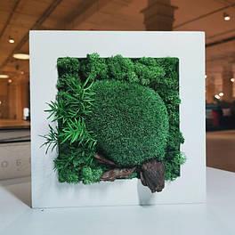 Картина 200*200 мм з стабілізованих рослин Осло