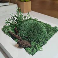 Картина  200*200 мм из стабилизированных растений Осло, фото 2