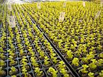 Какая емкость лучше для выращивания рассады?