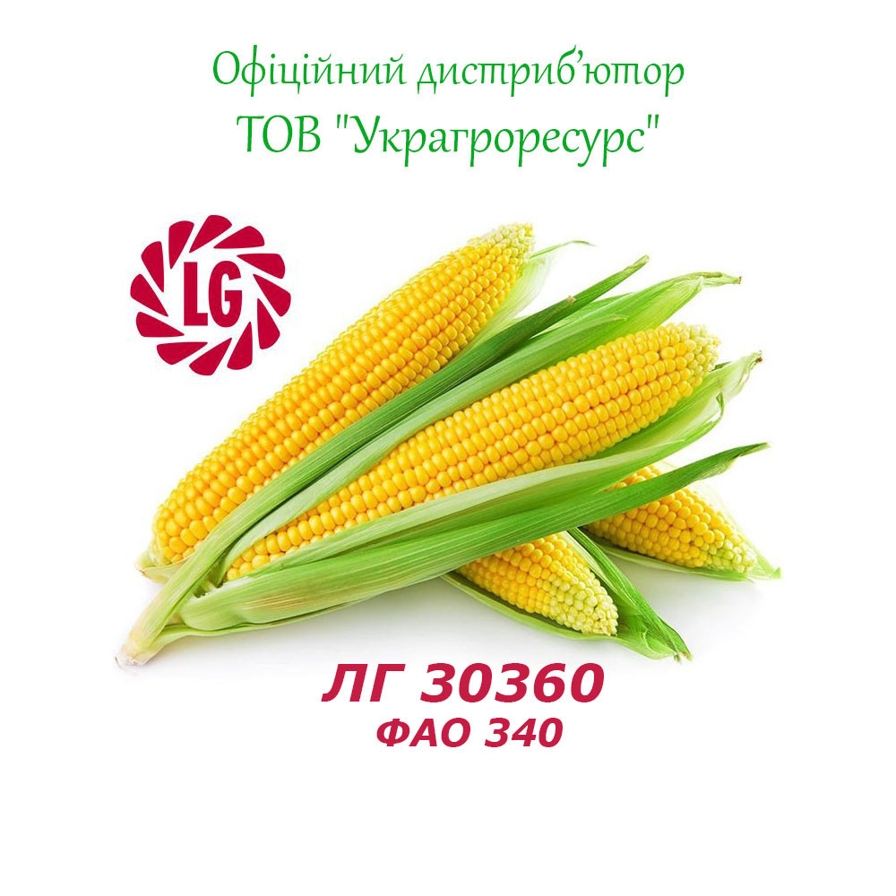 Семена кукурузы Лимагрейн ЛГ 30360