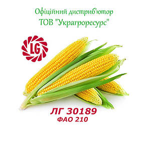 Семена кукурузы Лимагрейн ЛГ 30189