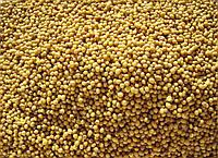 """Семена горчица """"желтая"""" сарептская (лат. Brássica júncea)"""