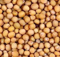 Семена горчица белая (лат. Sinápis álba)
