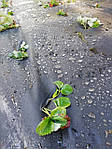 Агроволокно Greentex 50 г/м2 чёрное 1,6х100 м, фото 4