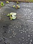 Агроволокно Greentex 50 г/м2 чёрное 1,6х100 м, фото 3