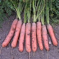 КРАСКА / KRASKA — морковь, SEMO 500 грамм