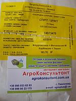 """Семена сахарной кукурузы """"Спирит"""" Ф1 на вес от 500 грамм"""