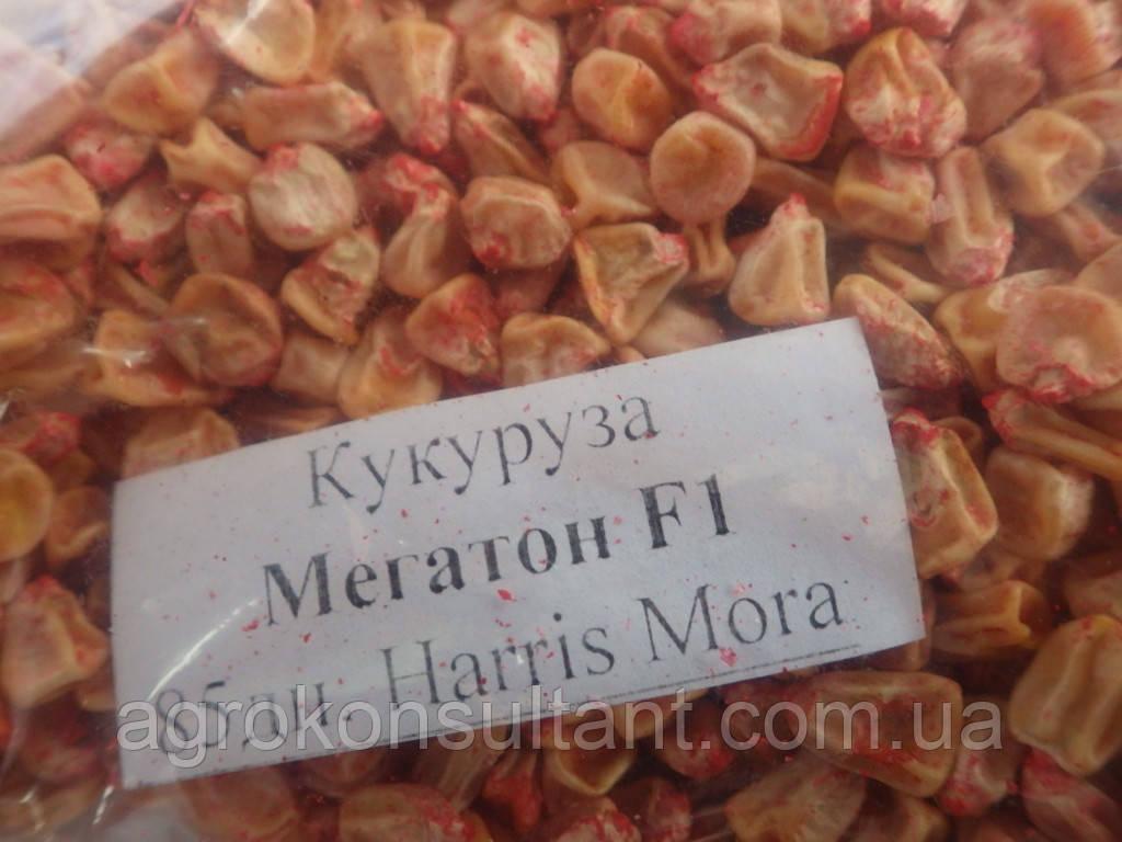 Насіння кукурудзи Мегатон F1 (Harris Moran), 5000 насіння - рання (85 днів), суперсолодка /