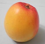 Яблуня Канзі. (М. 9). (в). Зимовий сорт., фото 2