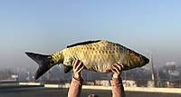Подушка рыба 90 см LSM