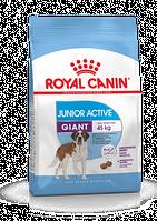 Роял Канин Royal Canin GIANT JUNIOR ACTIVE 15 кг.