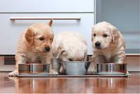Основные ошибки при кормлении собак