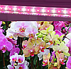 Фитолампа 9Вт 60см для орхидей, комнатных цветов, микрозелени