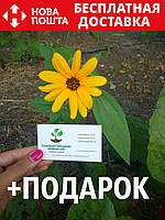 Подсолнух декоративный семена (10 шт)