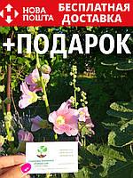 Мальва семена (10 шт) шток роза, штокроза цветы  Álcea