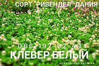 """Семена Белого Клевера """"Rivindell"""" Дания Урожай 2019"""