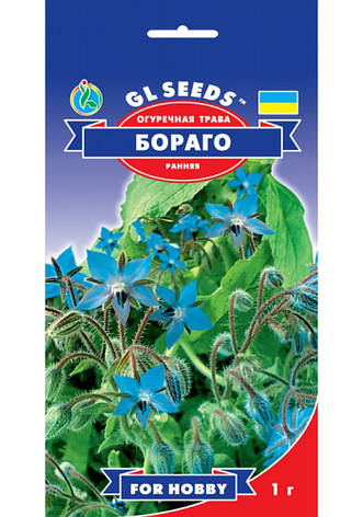 Семена Огуречная трава Бораго, фото 2