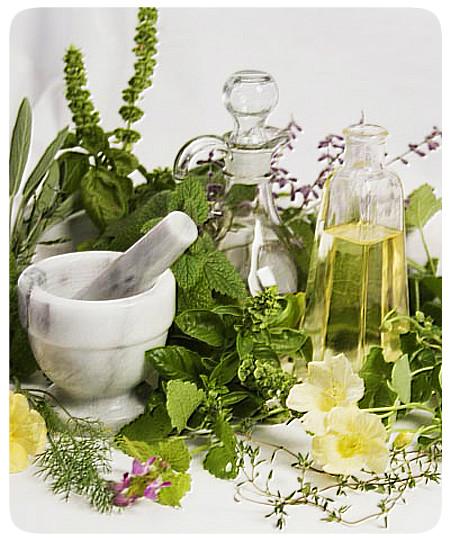 Лечебные травы для снижения веса