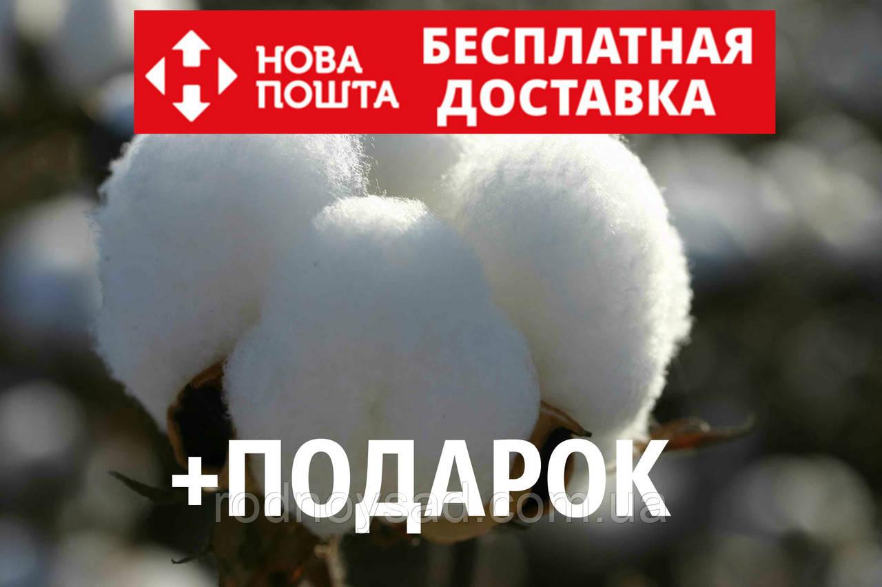 Хлопок семена (10 штук) хлопчатник обыкновенный (Gossypium hirsutum) насіння + подарок