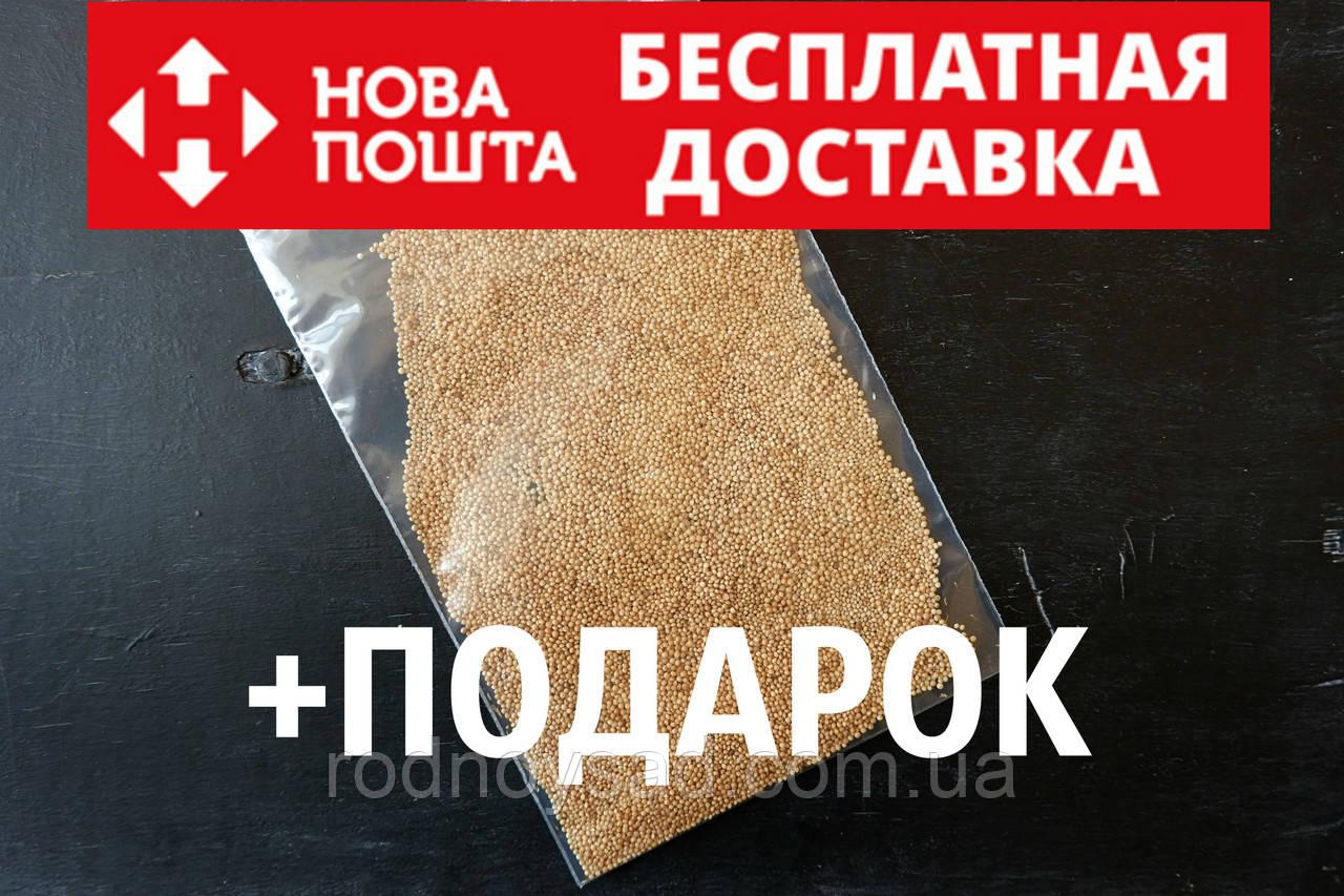 """Амарант сорт """"Харьковский-1"""" семена 20 грамм (около 10 000 штук)"""