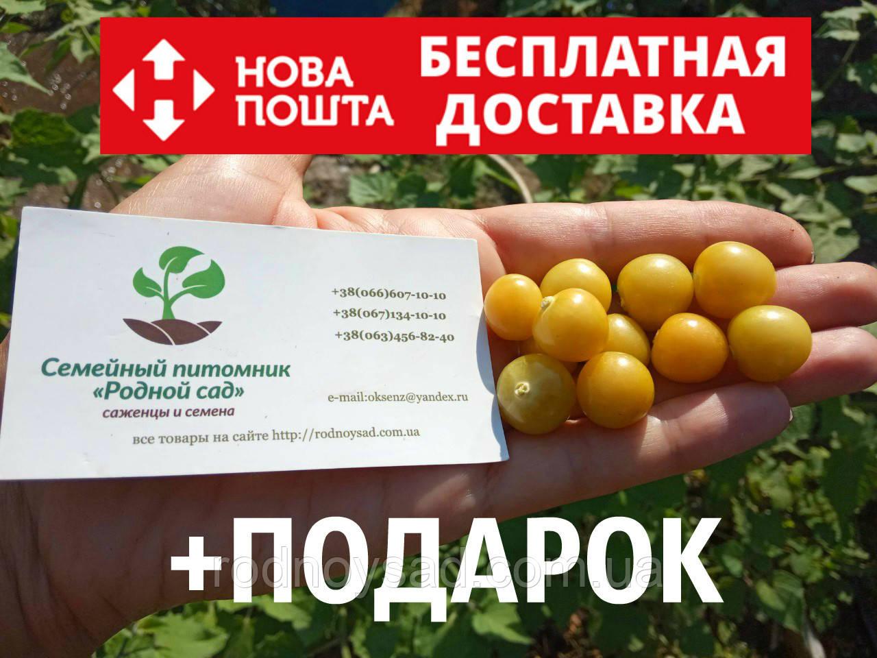 Физалис земляничный семена 10 шт фізаліс насіння + инструкции