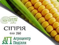 Семена кукурузы СИГИРИЯ ФАО 260