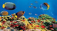 Коврик рыбки и рифы  WQ - 040