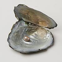 Жемчужина в раковине с кулоном и цепочкой — желание рожденное морем (с цепочкой и кулоном)