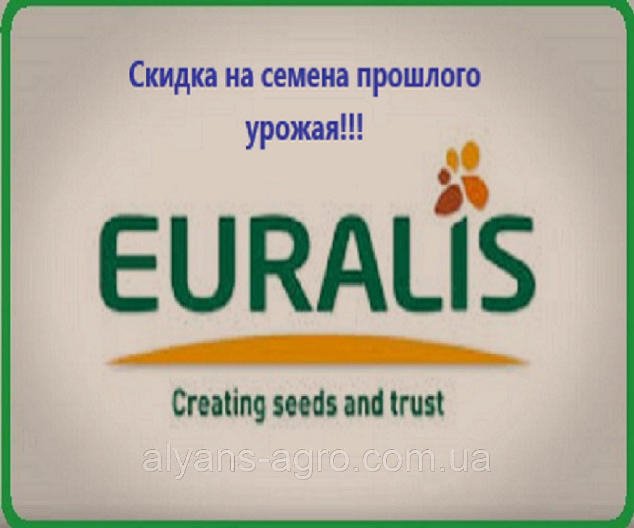 Янис Евралис (под Евролайтинг) семена подсолнечника