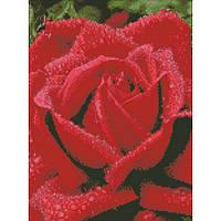 """Алмазная вышивка на холсте с подрамником, Цветы """"Душистая роза"""" 30*40 см, фото 1"""