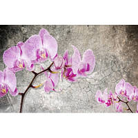 Фотообои  орхидеи на сером фоне (10471)