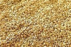Солод зерновой ячменный 5 кг. Malteurop 2019 год