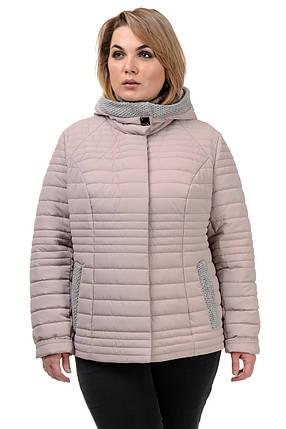 Женская демисезонная куртка  «Дора», р-ры 48-54, фото 2