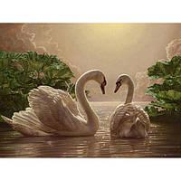 Картины по номерам Пара лебедей    / коробка 40*50   КН301