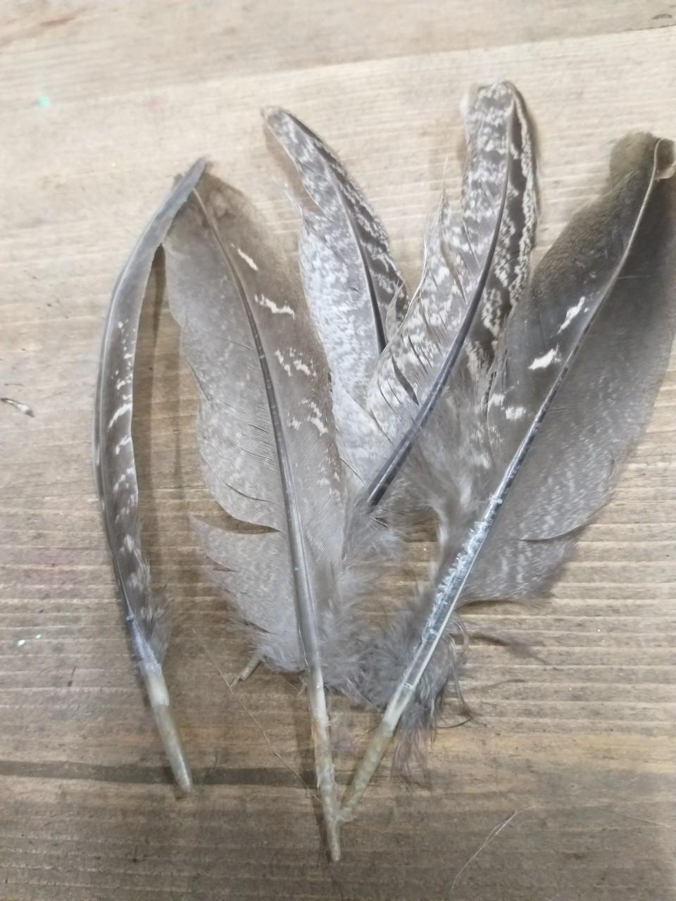 Красивые большие перья как заготовка для творчества, 5 шт. в упаковке, длина пера 13-16 см., 20 грн.