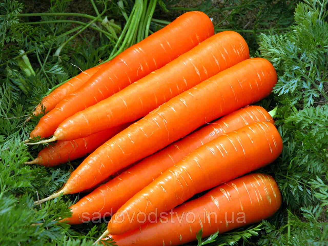 Морковь Хрустяшка