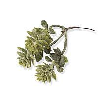 Декоративная веточка мини - Седум зеленый, длина 13 см, 1 шт