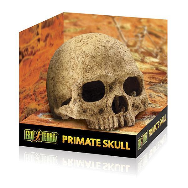 Декорація Exo Terra Primate Skull