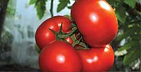 Панекра F1 (500шт) - Насіння томату індетермінантного, Syngenta