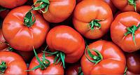 Насіння томату Бодерін F1 (500шт) Syngenta