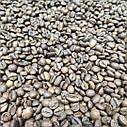 Кофе робуста в зернах Вьетнам 18 1кг, фото 2