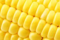 Світстар F1 (100 000шт) - Насіння кукурудзи цукрової, Syngenta