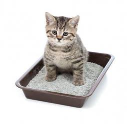Туалети для кішок