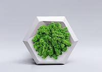 """Гипсовые 3D панели с мхом - """"Gipster Green"""""""
