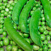 Ламбадо F1 (200 000шт) - Насіння овочевого гороху, Syngenta