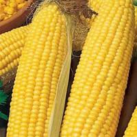 Кукуруза сахарная Фаворит, фото 1