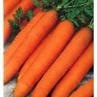 Романс F1 (100 000шт) 2,0-2,2мм - Насіння моркви, Nunhems