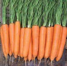 Елеганза F1 (100 000шт) 1,8-2,0мм - Насіння моркви, Nunhems